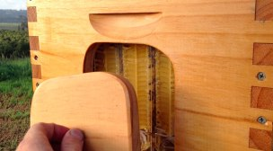 honey-on-tap-flow-hive-stuart-cedar-anderson-3